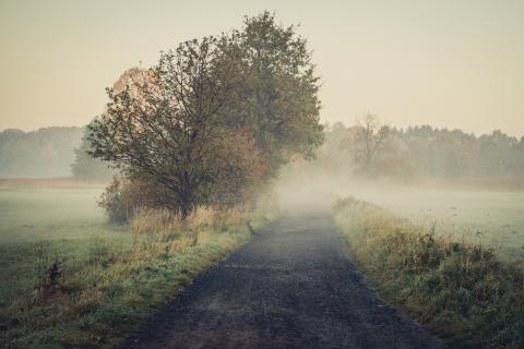 Pfad oder Feldweg im Nebel, von Marcus Pink